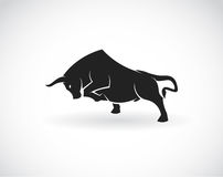 Vector image of an bull Stock Photo