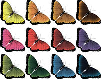 Vector image of 12 butterflies. Bright vector image of 12 butterflies royalty free stock photo
