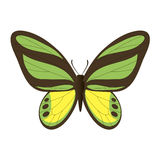 Vector image of the butterfly. Stock Image