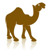 Vector image of an camel Royalty Free Stock Photography