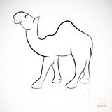 Vector image of an camel Stock Photos