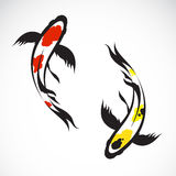 Vector image of an carp koi Royalty Free Stock Images
