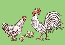 Sketches of a hen,cock and chickens. Vector image of the cartoon farm birds Royalty Free Stock Photos