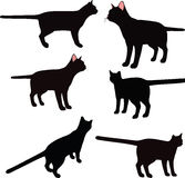 Vector Image - cat silhouette in standing pose isolated on white background Stock Photography