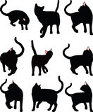 Vector Image - cat silhouette in Turn Around pose isolated on white background Stock Photos