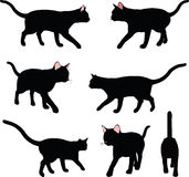 Vector Image - cat silhouette in Walking pose isolated on white background Royalty Free Stock Images
