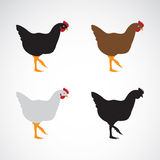 Vector image of an chicken design Stock Image