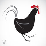 Vector image of an chicken Royalty Free Stock Photography