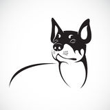 Vector image of an chihuahua dog Royalty Free Stock Images