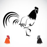 Vector image of an cock Stock Photo