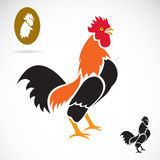 Vector image of an cock Royalty Free Stock Images