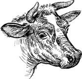 Cow head. Vector image of the cow head stock illustration