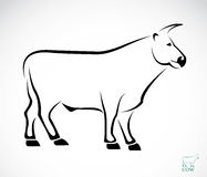 Vector image of an cow Stock Images