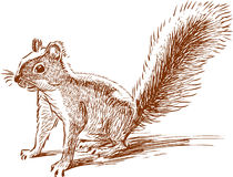 Funny squirell. Vector image of a cute wild squirell stock illustration