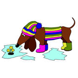 Vector image dachshund wearing rubber boots, which looks at the Stock Images