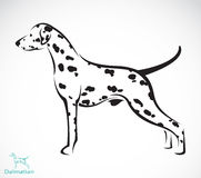 Vector image of an dalmatian dog. On white background Stock Photos