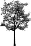 Vector image of a deciduous tree in the cold season royalty free stock image