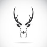Vector image of an deer head design on white background. Vector image of an deer head design on white background, Vector deer head for your design royalty free illustration