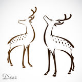 Vector image of an deer Royalty Free Stock Images