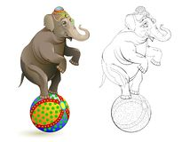 Fantasy illustration of cute elephant dancing on a ball at circus performance. Colorful and black and white page for coloring book vector illustration