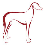 Vector image of an dog (azawakh) Royalty Free Stock Images