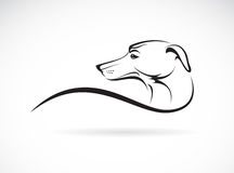 Vector image of an dog (azawakh). On white background royalty free illustration