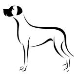 Vector image of an dog (great dane). On white background Stock Photography