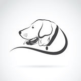 Vector image of an dog labrador head Stock Image