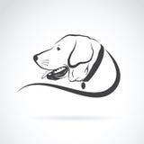 Vector image of an dog labrador head Stock Image