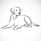 Vector image of an dog labrador. On white background royalty free illustration