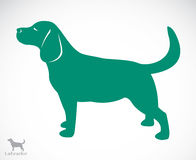Vector image of an dog labrador Stock Photography
