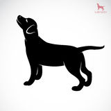 Vector image of an dog labrador Royalty Free Stock Images