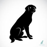 Vector image of an dog labrador. On white background Royalty Free Stock Photography