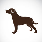 Vector image of an dog labrador Royalty Free Stock Image
