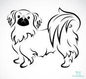 Vector image of an Dog (Pekingese). On white background Royalty Free Stock Image