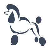 Vector image of an dog (poodle) Stock Images