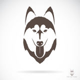 Vector image of an dog siberian husky Royalty Free Stock Photos