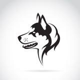 Vector image of a dog siberian husky. On white background stock illustration