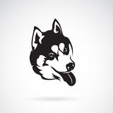 Vector image of a dog siberian husky. On white background Royalty Free Stock Photos