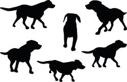 Vector Image - dog silhouette in default pose  on white background Stock Photography