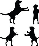 Vector Image - dog silhouette in default pose  on white background Stock Photo