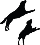 Vector Image - dog silhouette in default pose  on white background Stock Photos