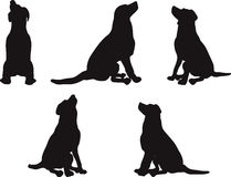 Vector Image - dog silhouette in default pose  on white background Royalty Free Stock Photography