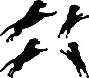 Vector Image - dog silhouette in default pose on white background