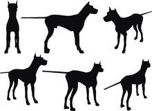Vector Image - dog silhouette in still pose  on white background Stock Photo