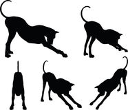 Vector Image - dog silhouette in stretch pose  on white background Stock Image