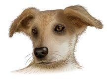 Vector image of an dog on white background– stock illustration Stock Photos