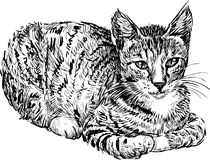 Domestic cat. Vector image of a domestic cat vector illustration
