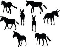 Vector Image, donkey silhouette, in walk pose, isolated on white background Royalty Free Stock Image