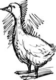 Goose. Vector image of a doodle goose vector illustration